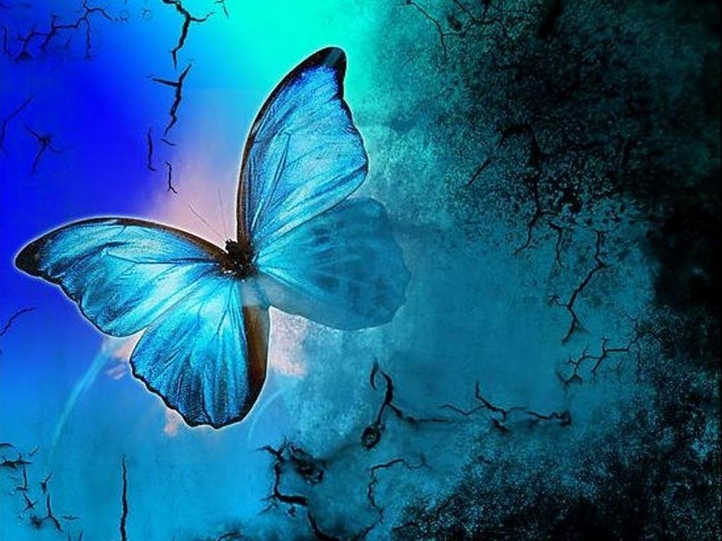 http://3.bp.blogspot.com/-fmPmtH6D21g/TxIkAwwkGyI/AAAAAAAABk4/hVO2B2SAB-s/s1600/Butterfly-butterflies-13492902-1024-768.jpg
