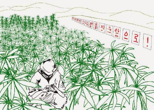 Maconha não é droga na Coréia do Norte