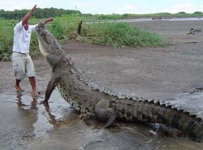Comparação de  tamanho entre  animais  e   Seres humanos Big+croc