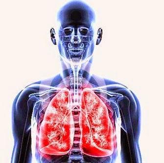 Pengertian Respirasi : Apa itu Respirasi ?...