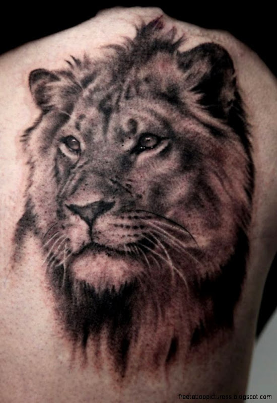 lion hearted tattoo  Angry Lion Tattoo On Man Right Shoulder
