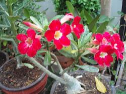 bungaku2