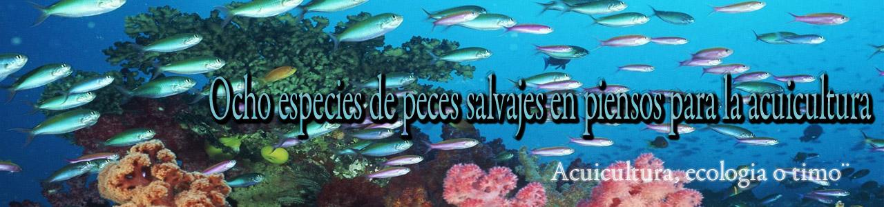 Especies de peces salvajes en piensos para acuicultura