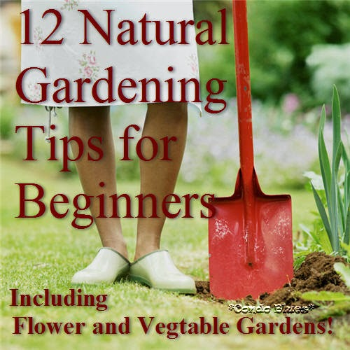 Condo blues 18 easy summer diy projects that will - Gardening tips for beginners ...