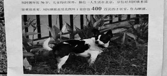 Tawaran Hadiah RM2.4 Juta Untuk Anjing Hilang