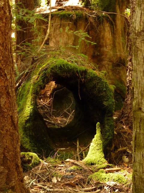 comptche woods