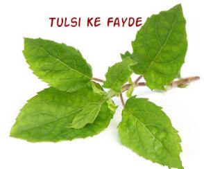 तुलसी के बीजों का औषधीय उपयोग
