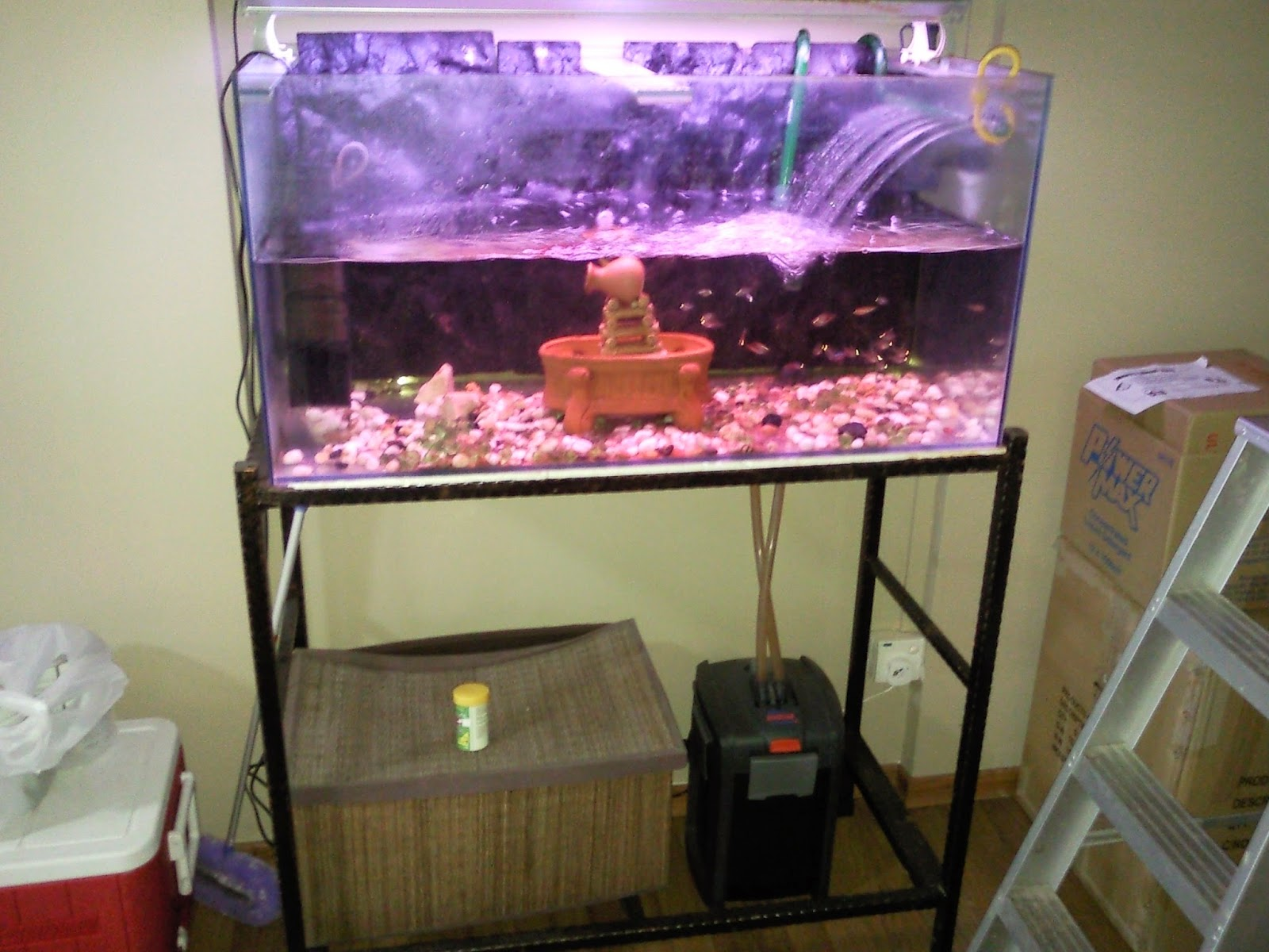 Singapore big sale used 3ft fish tank for sale near jjc for Used fish tank