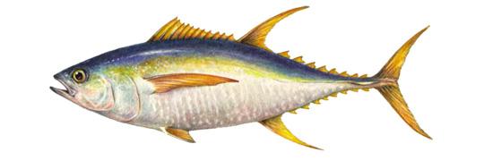 What Next Salmon Seafood Watch Monterey Bay Aquarium