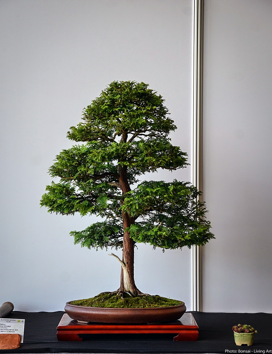 Bonsai Living Art Photos From The VI International Bonsai