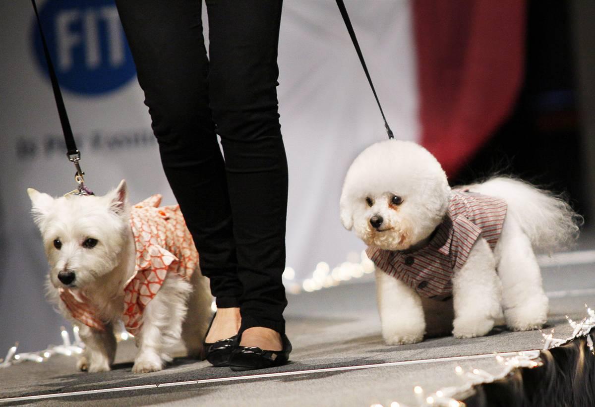 défilés pour chiens