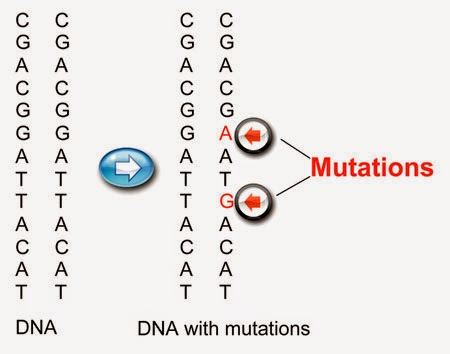 What is Mutation?