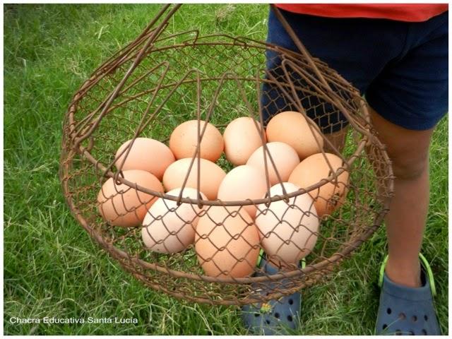 Docena de huevos - Chacra Educativa Santa Lucía