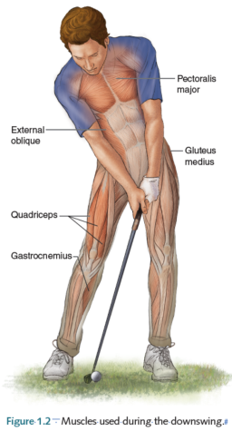 Biomechanics What Are The Biomechanics Involved In A Golf Swing To