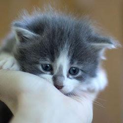 Anak Kucing Comel Sangat