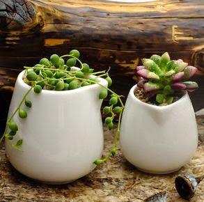 Decoracion con Plantas y Flores, Elección Perfecta