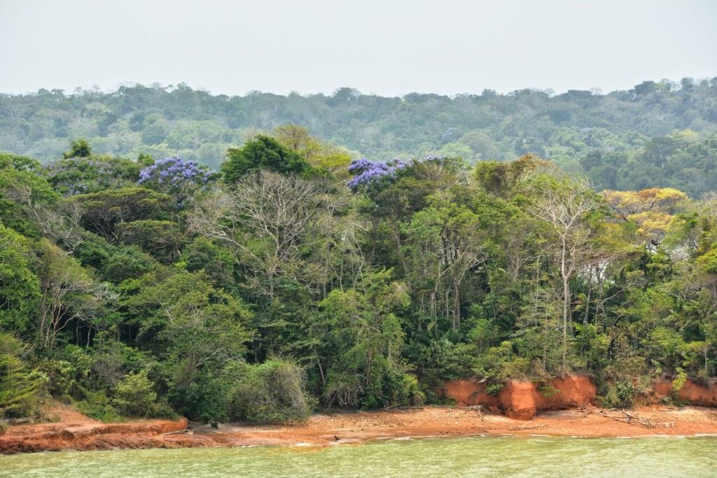 Gatun Lake Panama blosoms