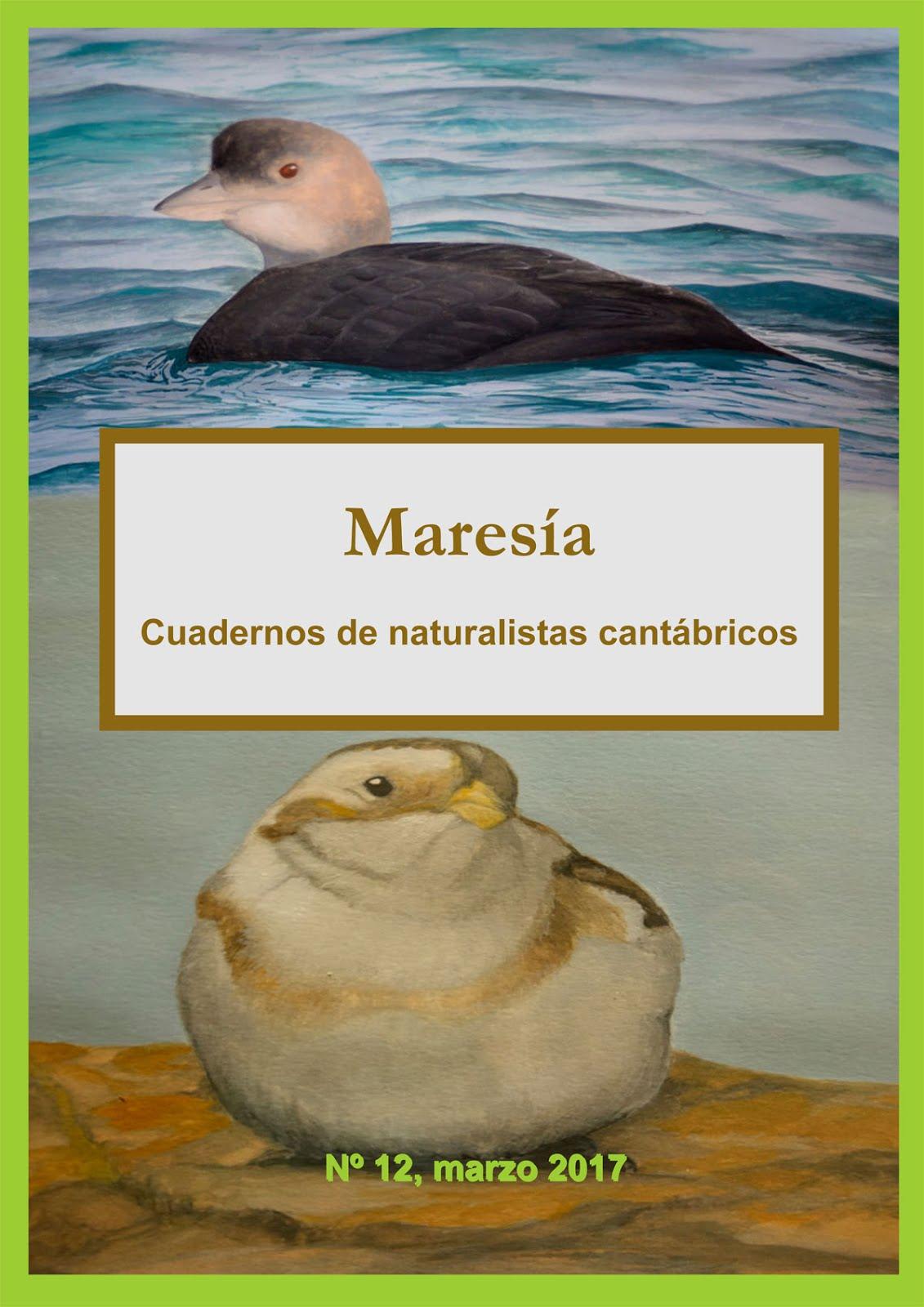 Maresía 12