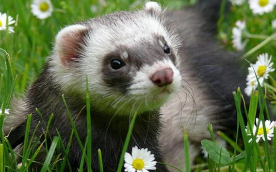 Animales en combate tur n - Como cazar un raton en un piso ...