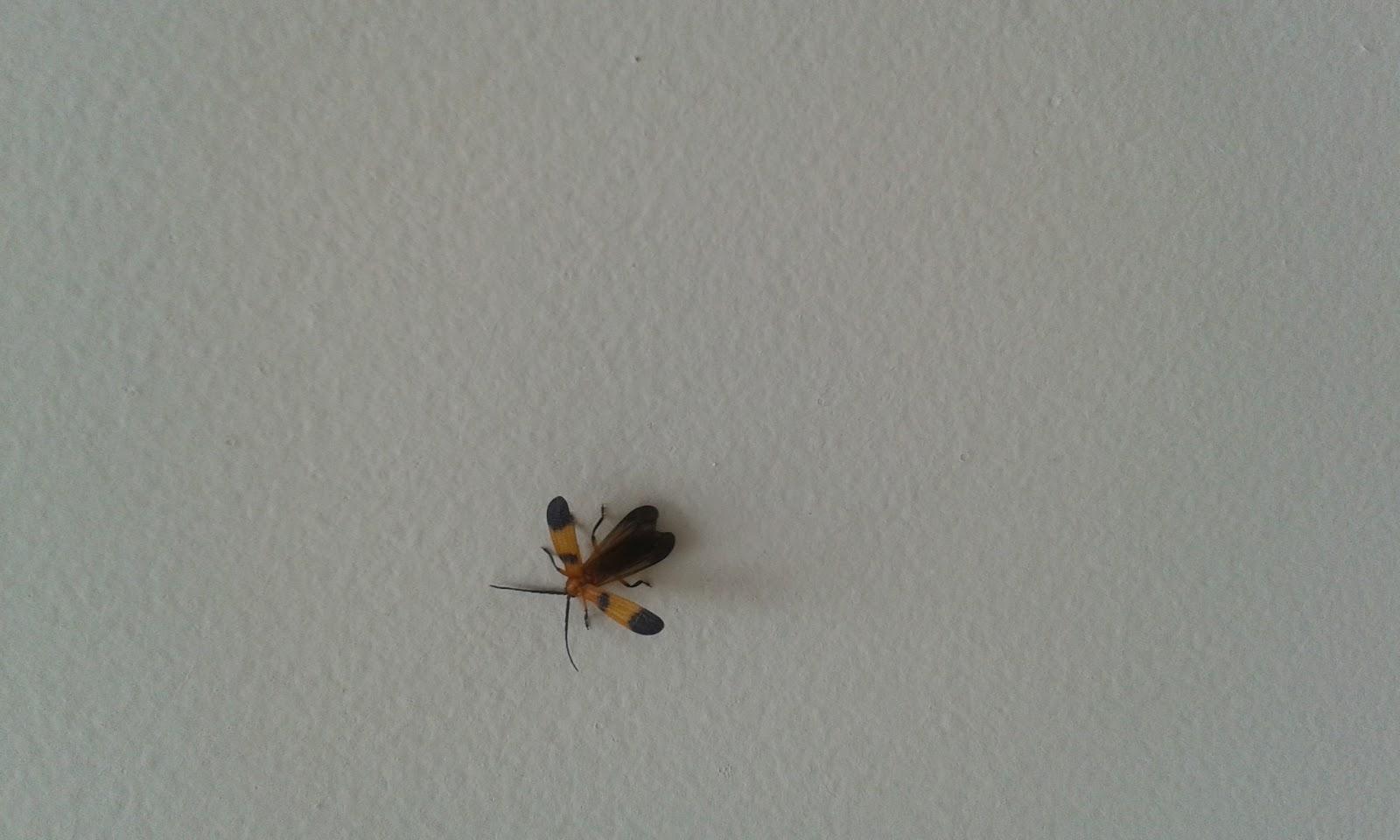 Bruine Beestjes Badkamer : Kleine bruine beestjes in huis