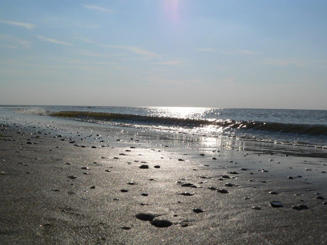 Noordwijk Hundestrand Holland Niederlande ein Tag am Meer Hund Ausflug Tagesausflug Urlaub Sommer