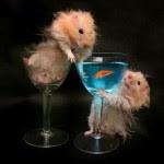 Drunk Rat Hunting Fish