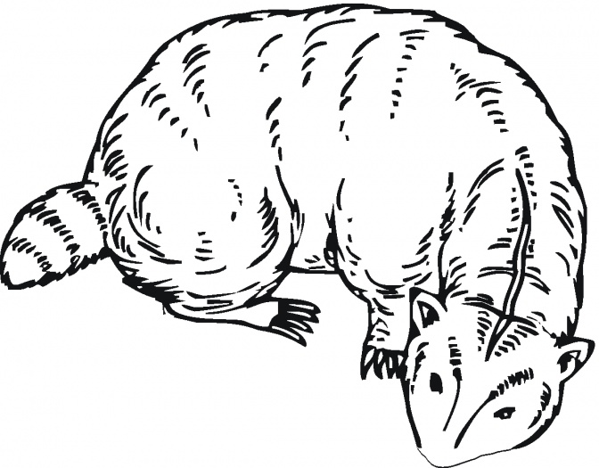 coloring pages badgers - photo#15