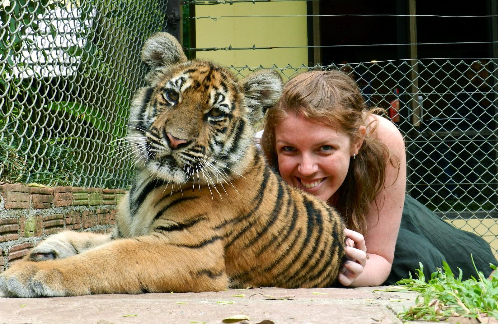 Tiger Temple vs Tiger Kingdom, Thailand (Cute baby tigers)