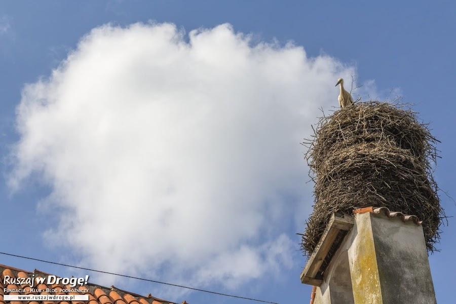 Na dachu Szpitalu Św. Ducha