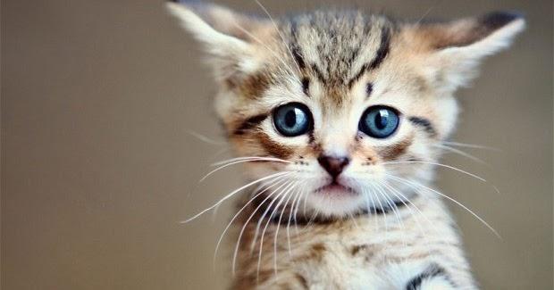 Image chaton mignon gratuit photo de chat - Chatons gratuit ...