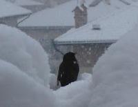 3 days of blackbird - legend