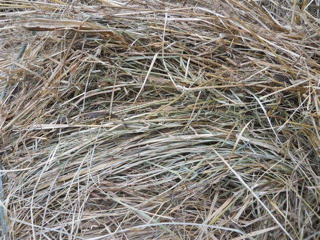 White House Farms: 4X5 Fescue Cow Hay from the Barn!