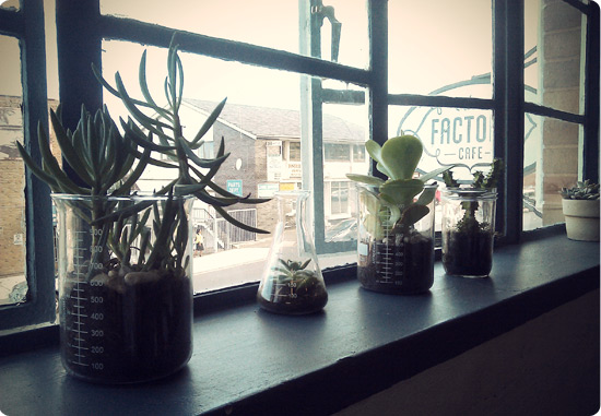 Cool plant displays at the Factory Cafe
