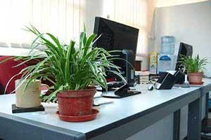 Atasi Stres Di Tempat Kerja Dengan Tanaman