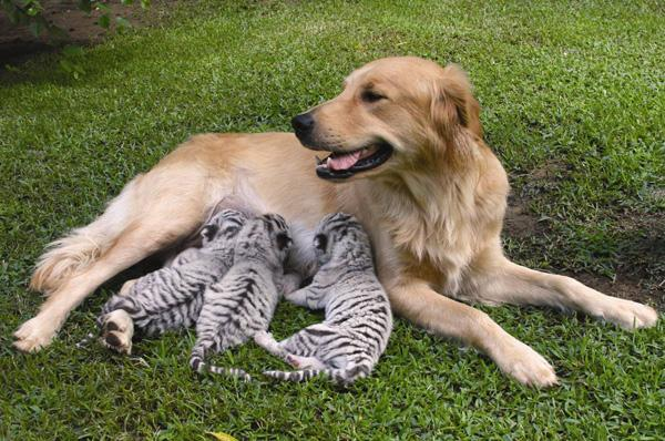 all funny cute cool and amazing animals amazing animals images and