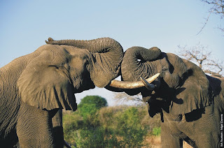 Holiday Fans travel the World RTW -family activities Budget Travel African Elephants Dangerous Animals in The World