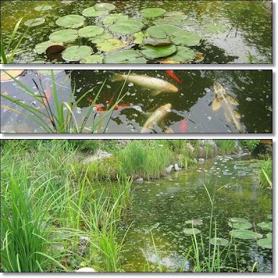 Neues vom lindenhof hanggarten mit berraschung for Was fressen fische im teich