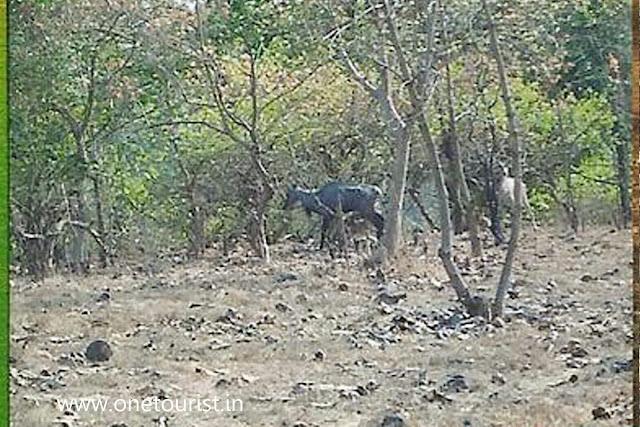 deer park , silwassa , dadra and nagar haweli