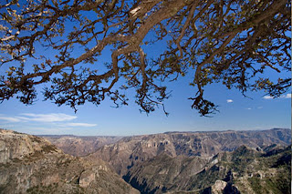 Travel pictures gallery of Copper Canyon,mexiko,photo,cooper canyon