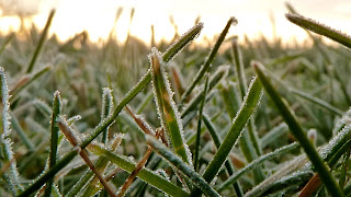Jack Frost on the blades of grass