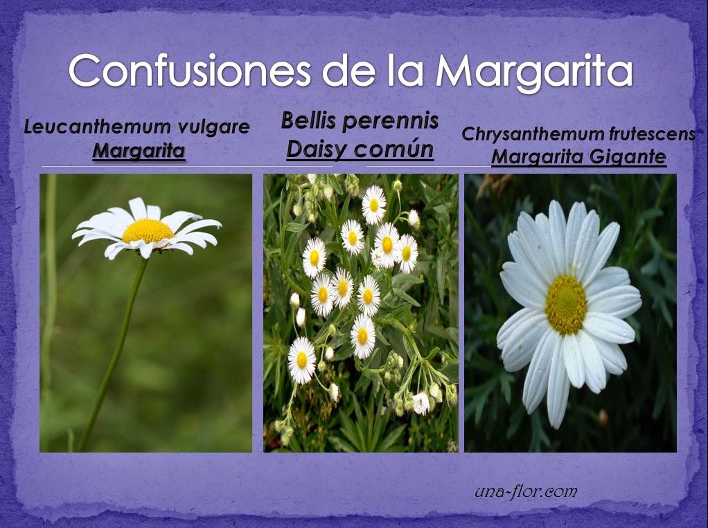 Flores Y Rboles Margarita