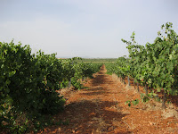 viñas cultivo orgánico CUSPIDE
