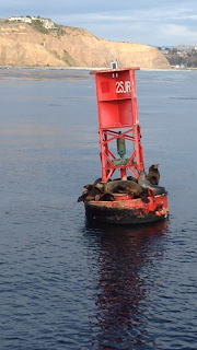sea lions on buoy at dana point