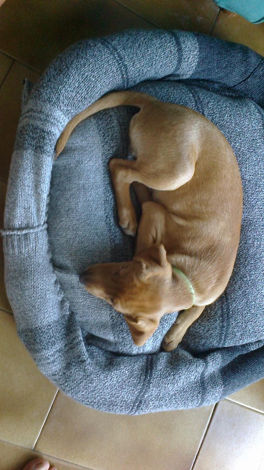 Taller campesino: Riciclare: come ottenere una cuccia per cani