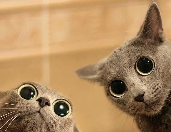 cute cartoon cats with big eyes