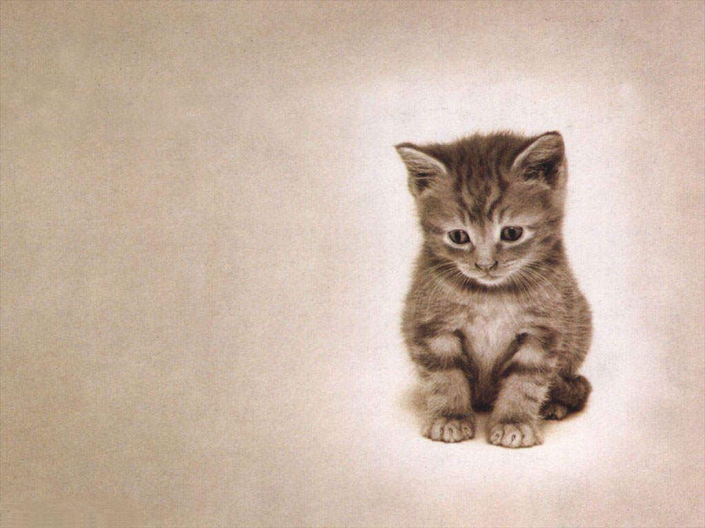 lonely sad cat - photo #26