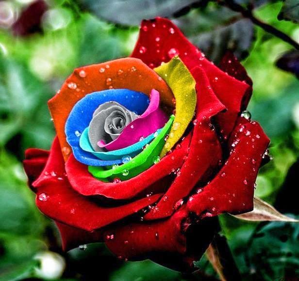 Flores bonitas | Fotos de naturaleza, animales, paisajes, animadas ...
