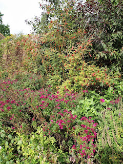 Colourful planting and rose hips, Garden design London and Sussex