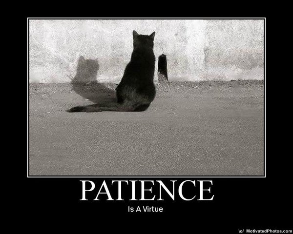 الصبر - قطط - صور حكم