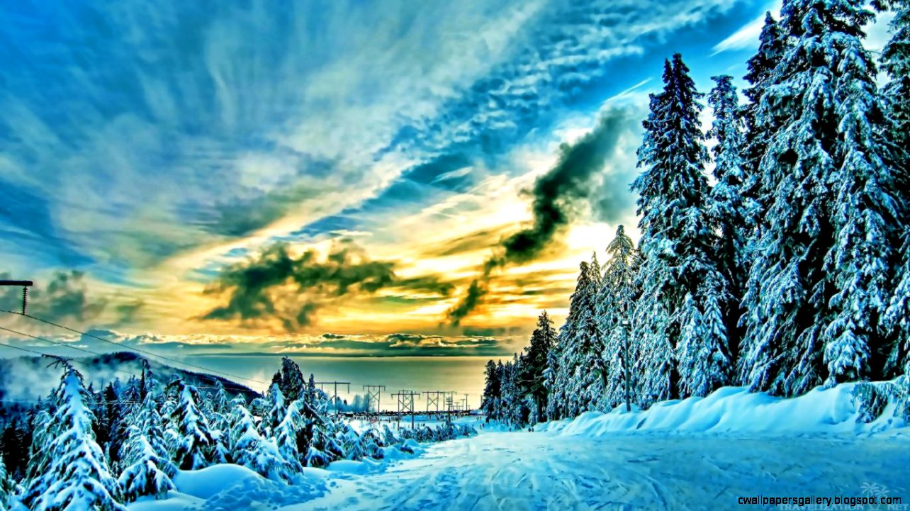 Amazing Winter Forest Wallpapers  Travelization